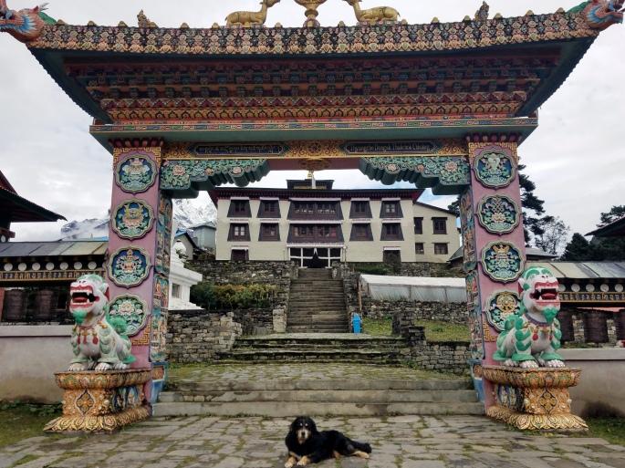 monastery_dog